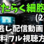 アニメ「はたらく細胞!! 2期 」を見逃し配信動画で無料フル視聴する方法