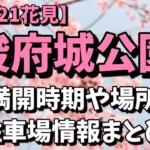 【2021花見】駿府城公園の桜の満開時期はいつ?オススメの場所や駐車場情報まとめ