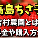 高島ちさ子がいちご狩りをした場所は吉村農園!料金や通販での購入方法まとめ【今くら】